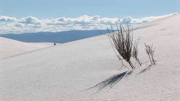 Medium shot of a scraggly plant at White Sands National Monument in New Mexico. Royalty-free stock video