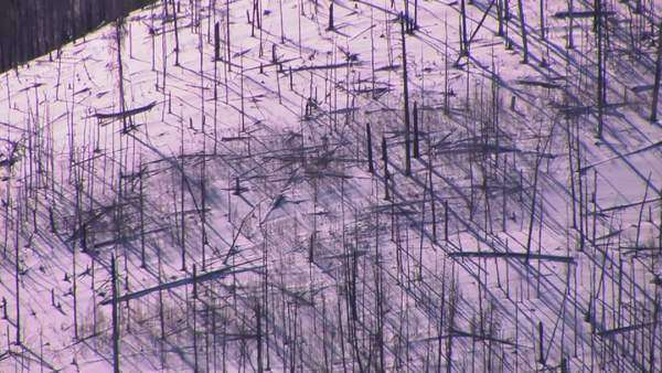 Bare trees cover a snowy mountainside. Royalty-free stock video