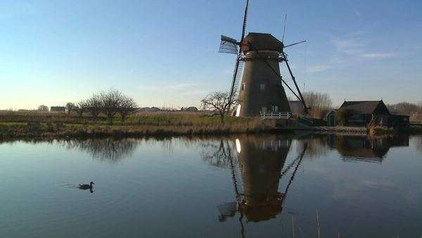 Windmills line a canal in Holland as ducks float by. Royalty-free stock video
