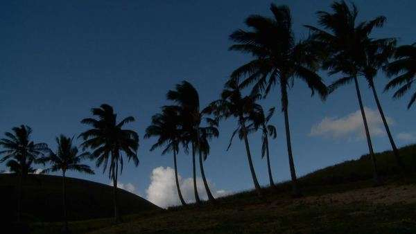 Palm trees blow in the wind on a remote tropical beach. Royalty-free stock video