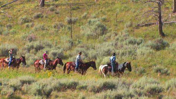 Horses and riders take a pack trip through the wilderness. Royalty-free stock video