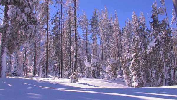 Pan across a beautiful snowscape in winter. Royalty-free stock video