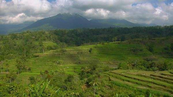 A terraced rice farm grows green fields. Royalty-free stock video