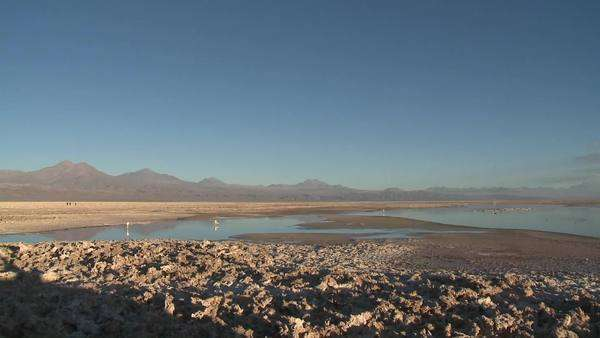 Pan across the mineral formations and flamingo habitat at the Laguna Chaxa in the Reserva Nacional Los Flamencos, Chile Royalty-free stock video