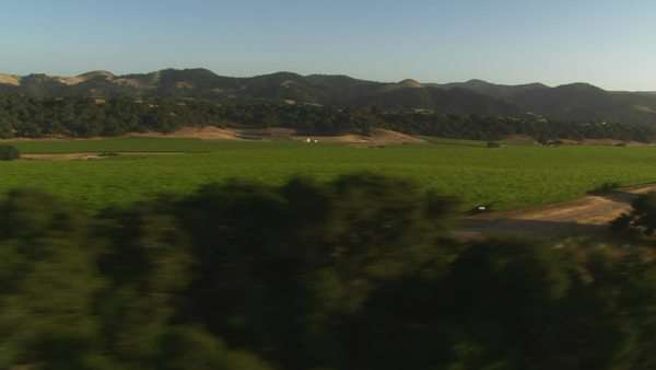 Helicopter low level aerial of Santa Barbara County vineyards California. Royalty-free stock video