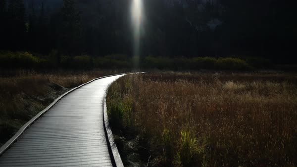 Wide shot of wooden path leading through a grassland Royalty-free stock video