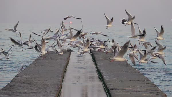 Several Seagulls Soar off the Concrete Pier. Slow Motion. Royalty-free stock video