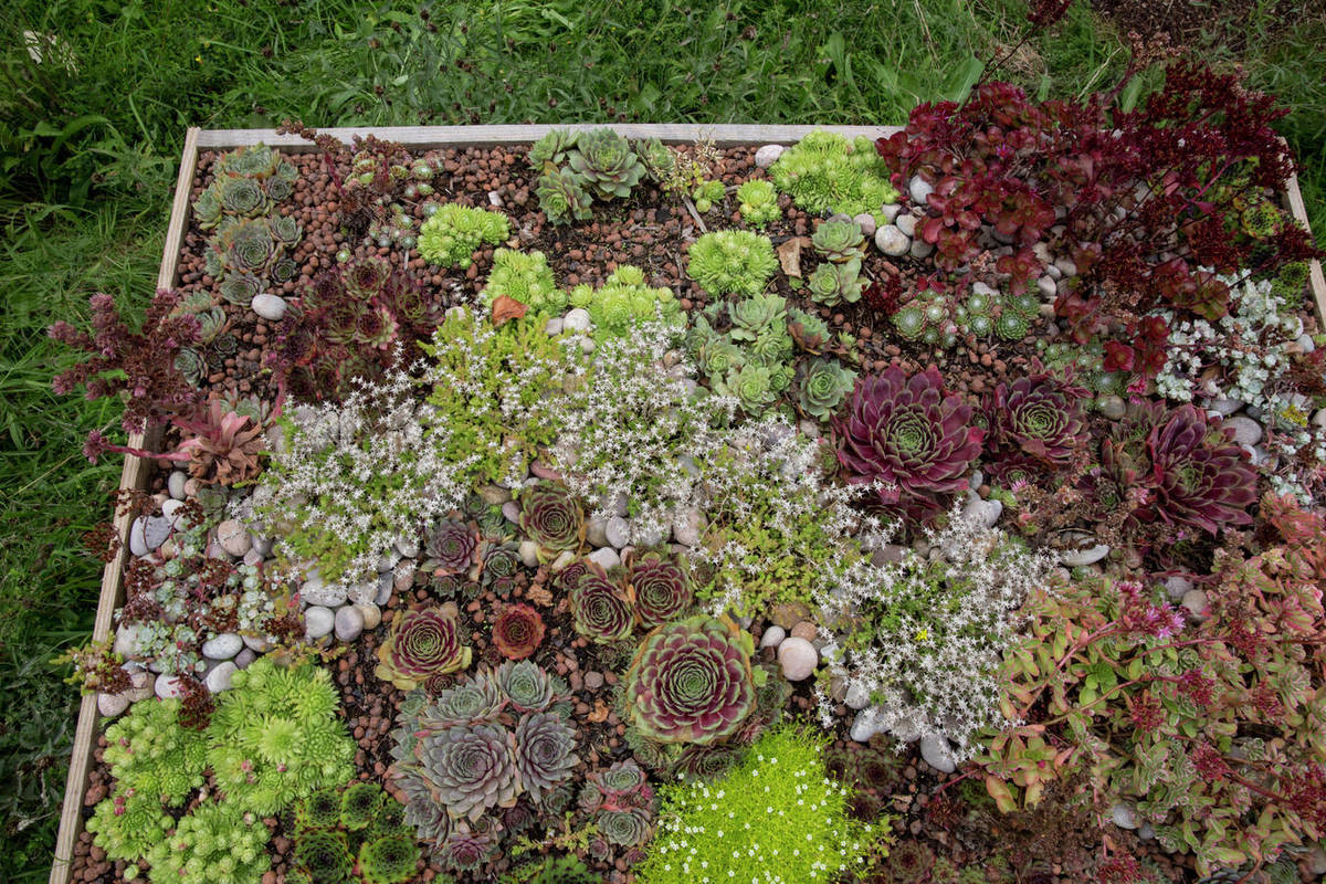High Angle View Of Flower Bed With Selection Of Succulent Plants In A Garden Stock Photo Dissolve