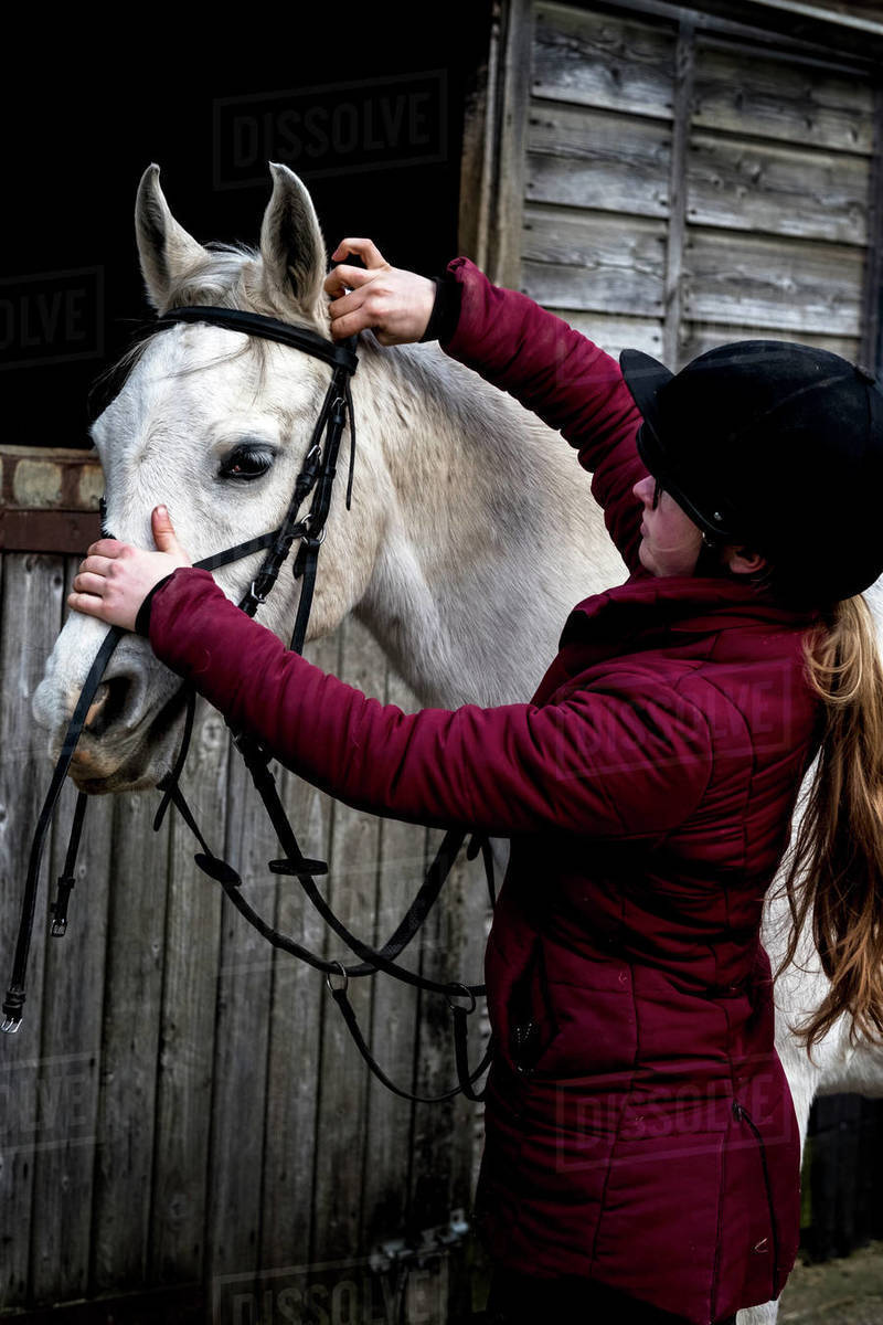 Young woman standing outside stable, putting bridle on white Cob horse. Royalty-free stock photo