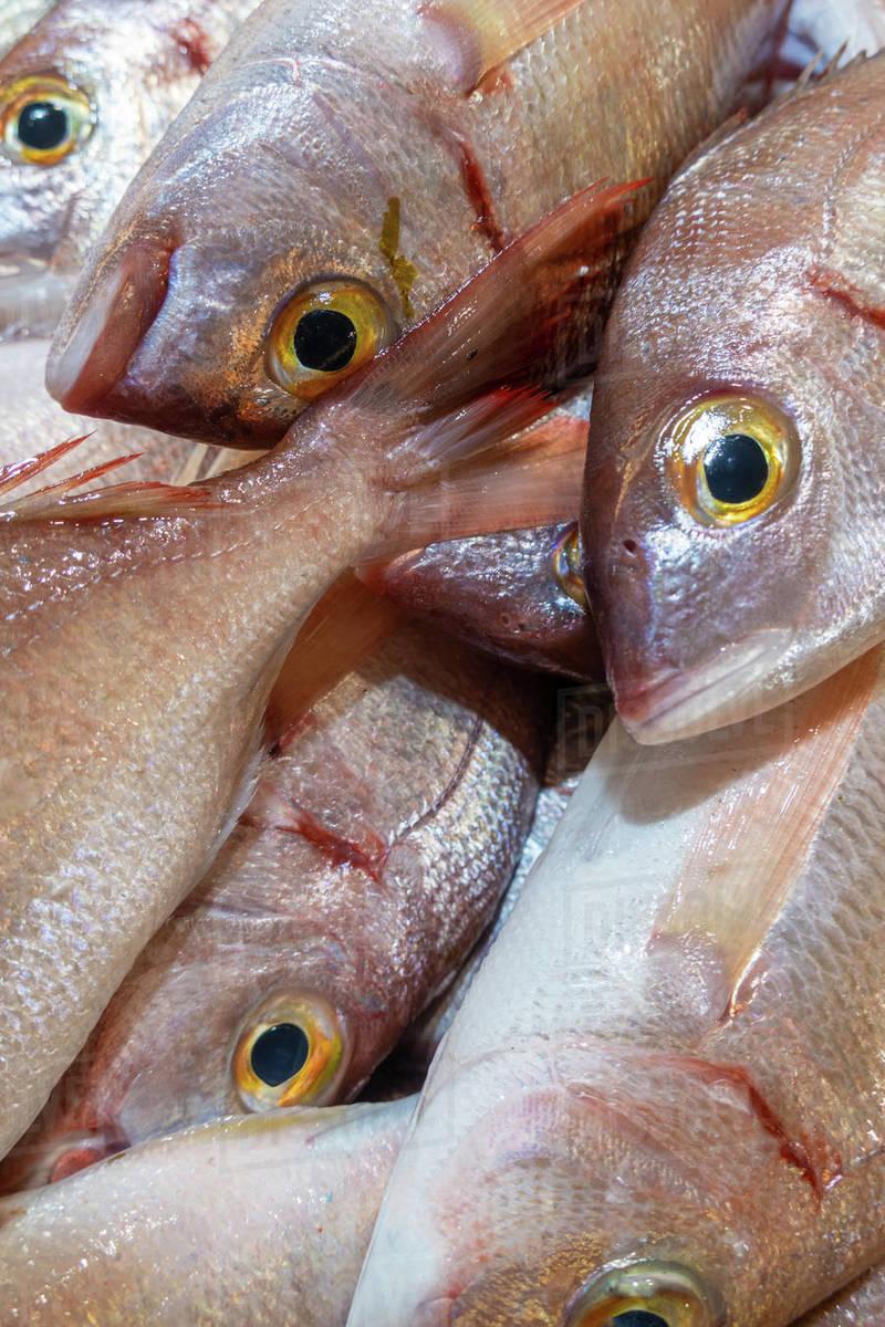 Fresh Bica fish in Portugese fish market, Algarve, Potugal Royalty-free stock photo