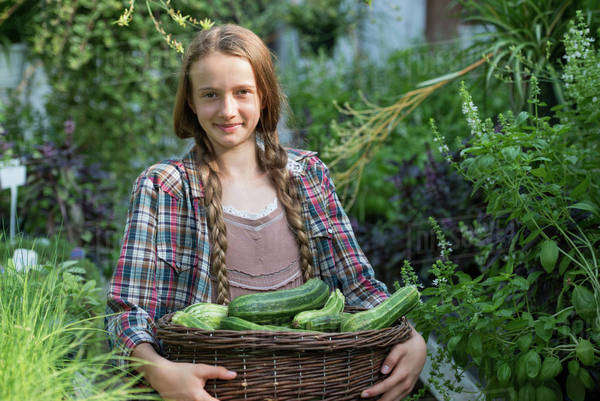 Summer on an organic farm. A girl holding a basket of fresh marrows. Royalty-free stock photo