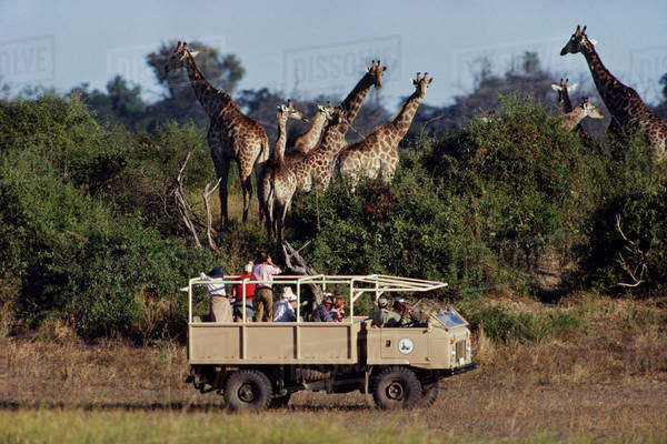 Tourists watching giraffes, Chobe National Park, Botswana Rights-managed stock photo