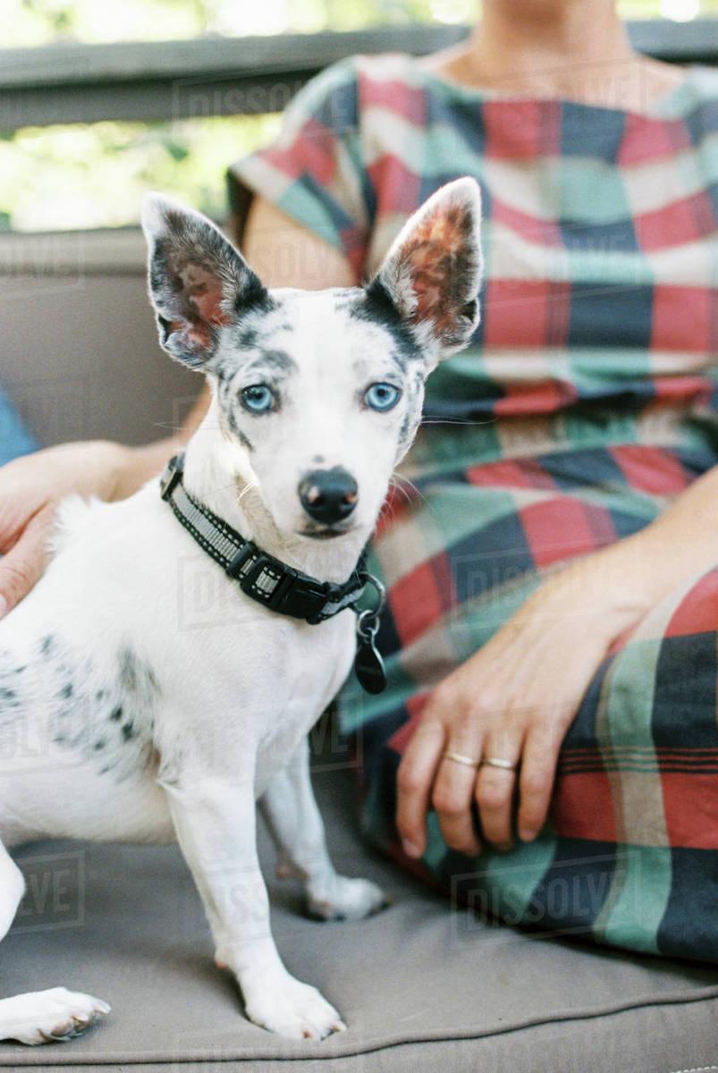 Surprising A Man And A Small Dog With Large Ears Seated D1024 66 208 Frankydiablos Diy Chair Ideas Frankydiabloscom