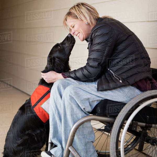 A mature woman wheelchair user with her service dog, a black Labrador, leaning in towards each other.  Royalty-free stock photo