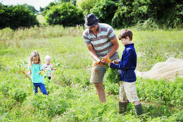 A man and three children holding carrots in a vegetable patch. Royalty-free stock photo