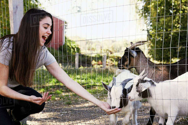 A young woman crouching down and feeding a group of goats through a wire fence. Royalty-free stock photo