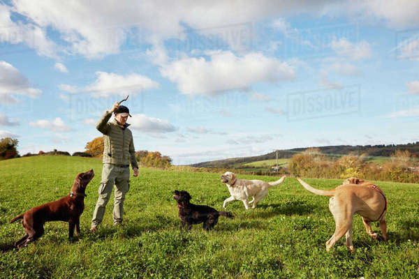 Dog walker, a man with his arm raised to throw a stick for three dogs. Royalty-free stock photo
