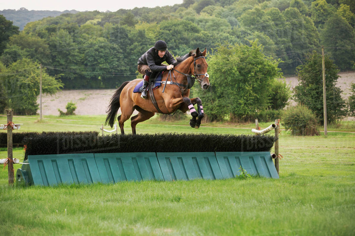 Man On A Bay Thoroughbred Horse Jumping A Brush Fence A Racing Hurdle On A Rural Point To Point Course Stock Photo Dissolve