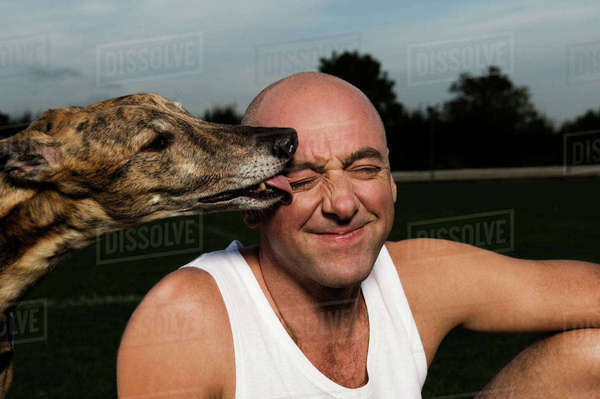 Bald man in white vest sitting on racetrack, brindle greyhound licking his face. Royalty-free stock photo