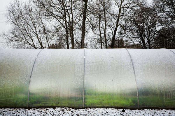 Exterior view of a poly tunnel in winter at Le Manoir aux Quat'Saisons, Oxfordshire. Royalty-free stock photo