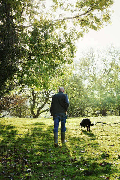 Rear view of sheep farmer, shepherd walking across a meadow with his sheepdog. Royalty-free stock photo