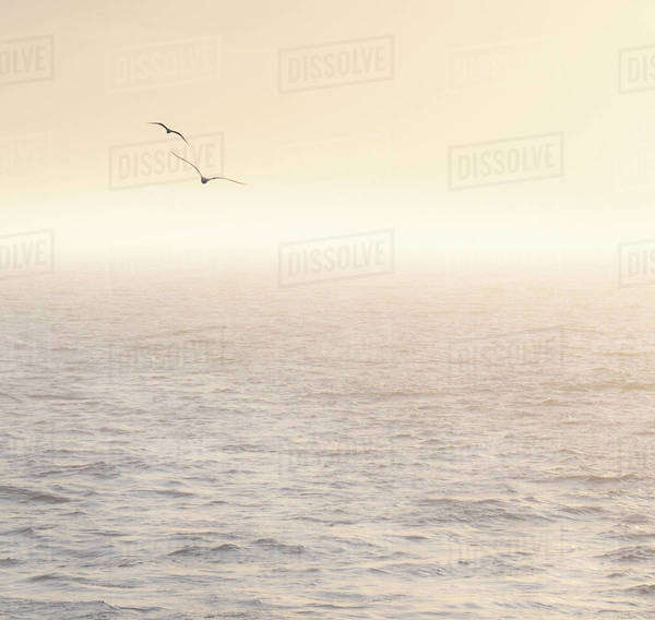 Seagulls flying over Mediterranean sea at sunrise Royalty-free stock photo