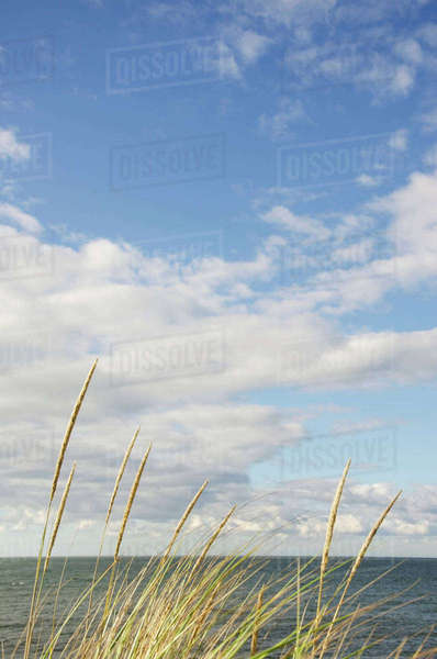 Cape Cod seascape with marram grass in sunlight Royalty-free stock photo