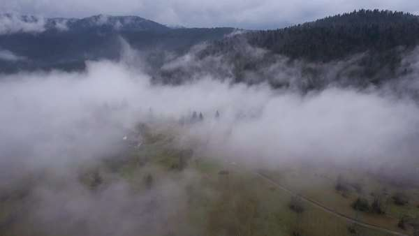 Aerial - Fog coming out from the forest after the rain Royalty-free stock video