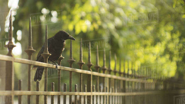 Bird on a fence in a garden in Paris Royalty-free stock photo