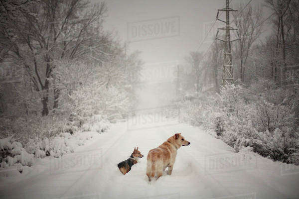 Two dogs on snowy railroad track Royalty-free stock photo