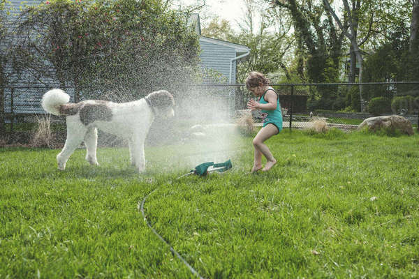 Side view of girl and dog standing by spraying water at yard Royalty-free stock photo