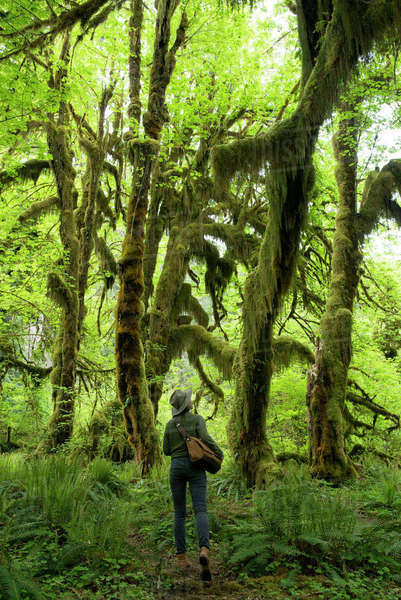 Rear view of female hiker walking amidst Hoh Rainforest Royalty-free stock photo