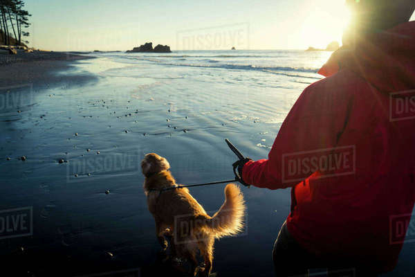 Rear view of hiker with Golden Retriever walking at Ruby beach during sunset Royalty-free stock photo