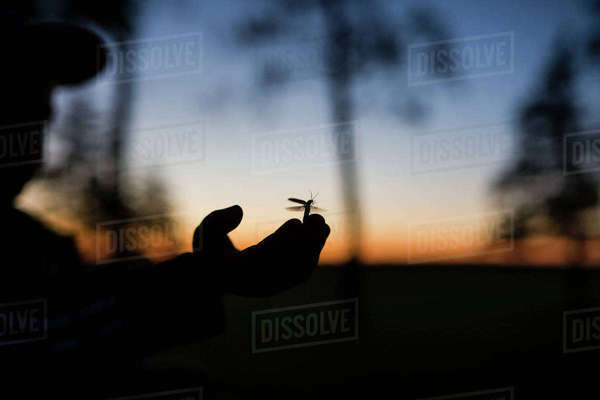 Cropped image of silhouette boy with insect on hand during dusk Royalty-free stock photo