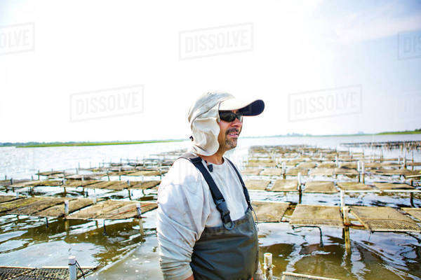 Oyster fisherman standing in water Royalty-free stock photo