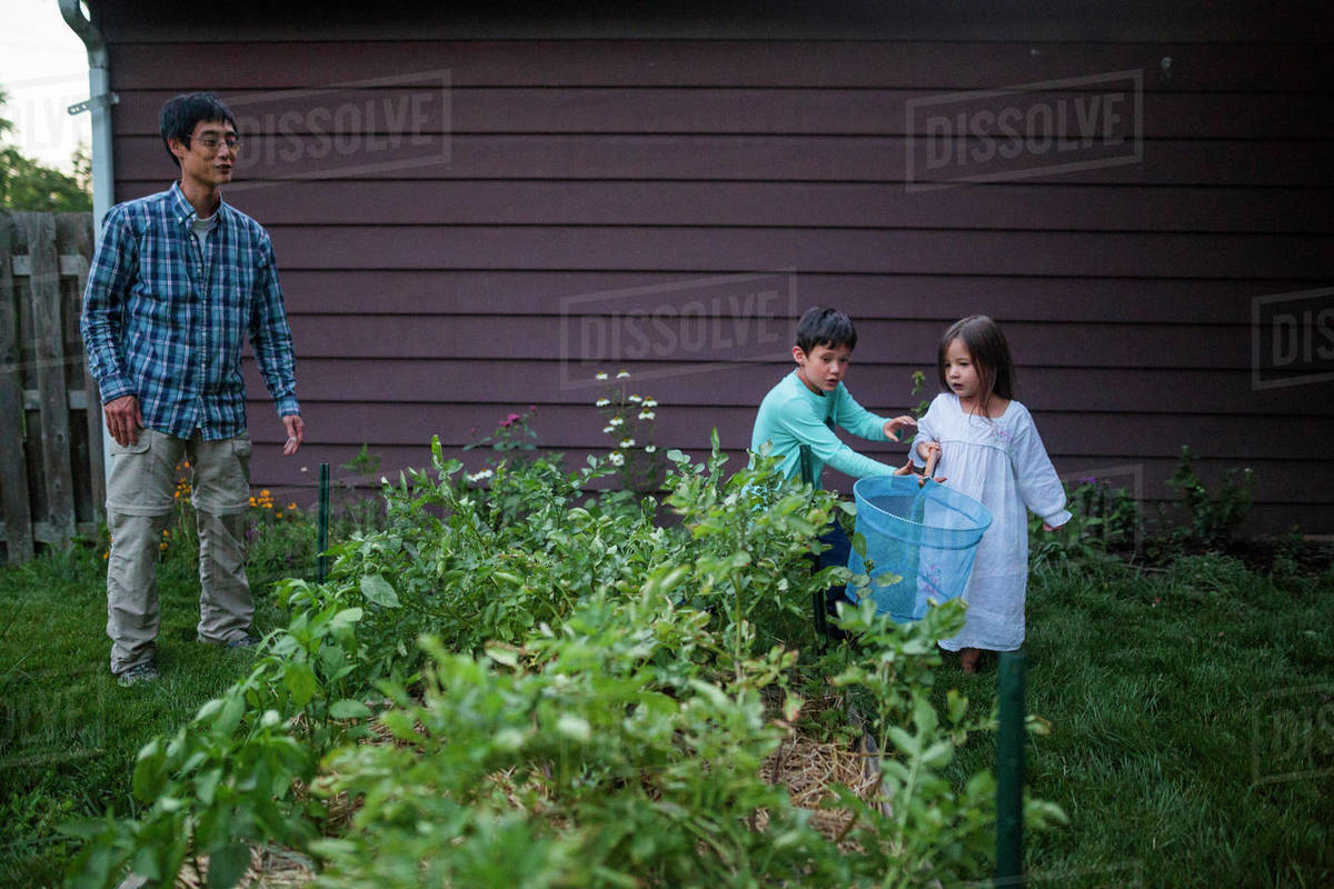 Father Looking At Children Catching Firefly With Butterfly Net At