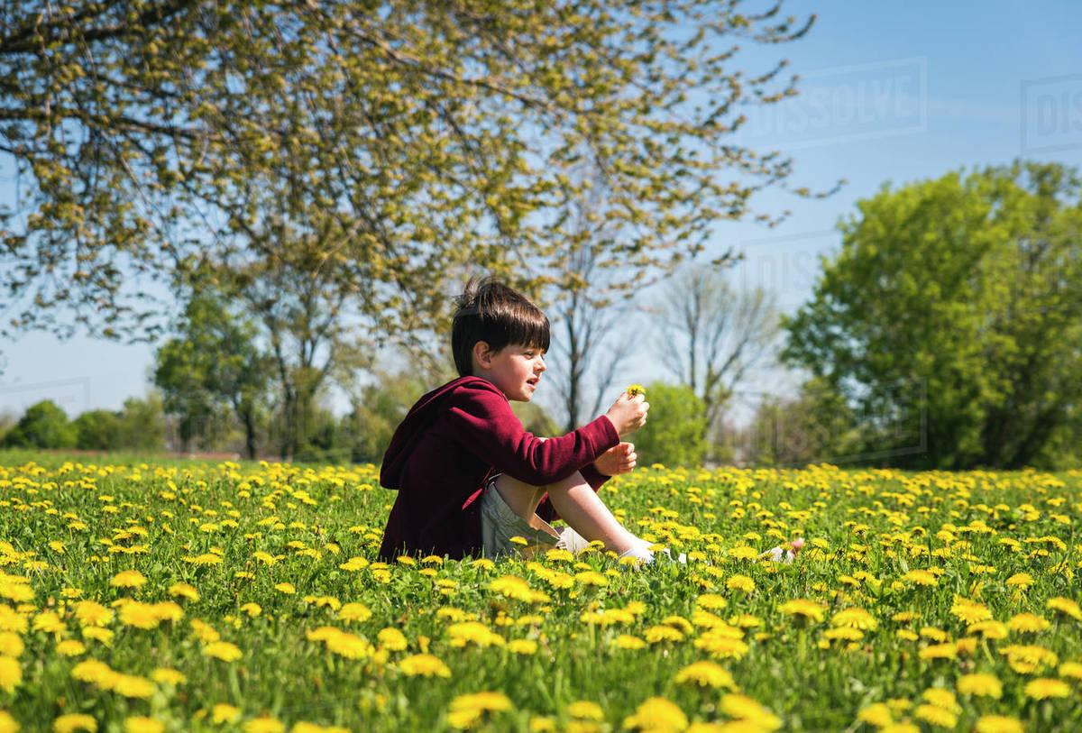 Side View Of Boy With Broken Leg Sitting Amidst Yellow Flowering