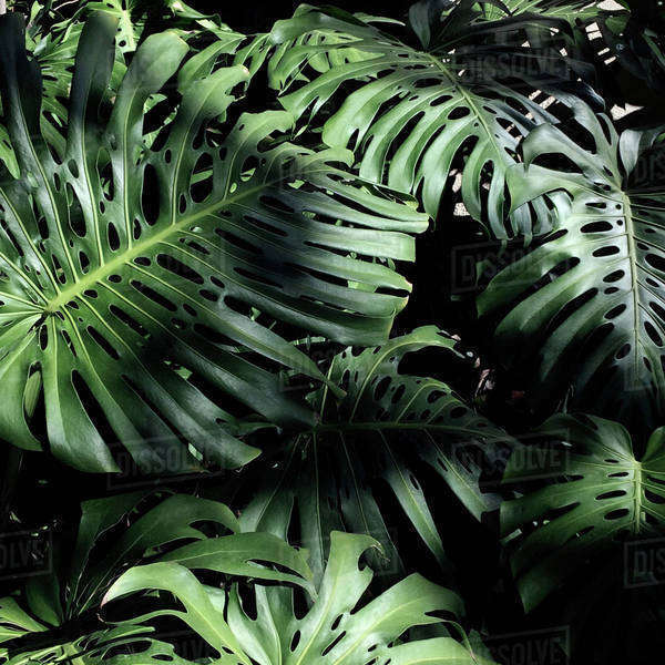 High angle view of leaves growing on plants Royalty-free stock photo