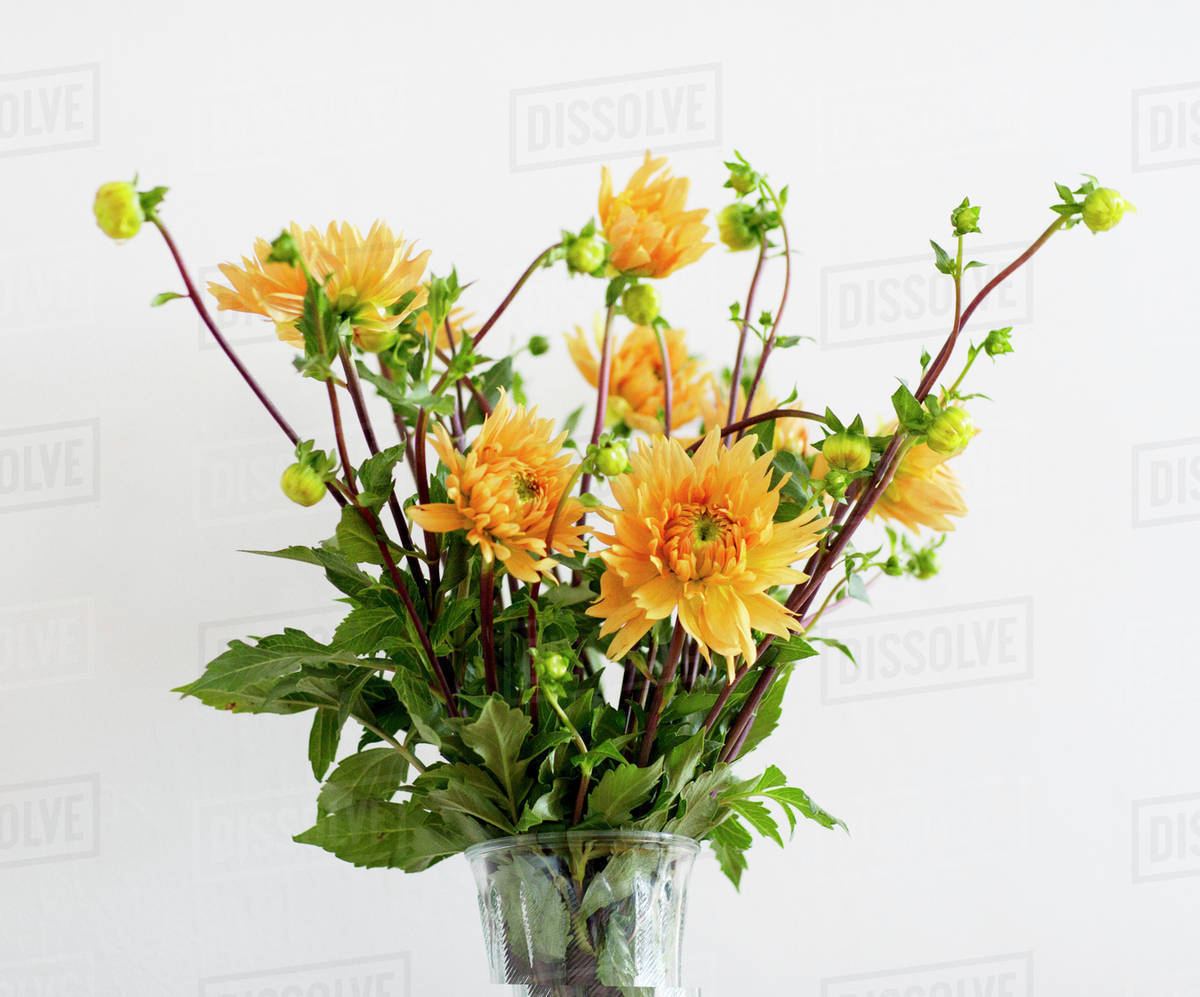 Close Up Of Yellow Flowers In Vase Against White Background Stock