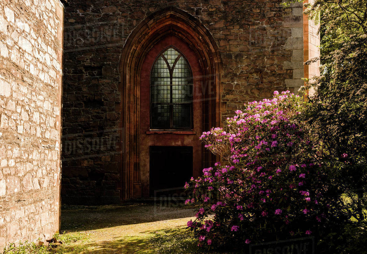 Church door with a rhododendron bush in front Royalty-free stock photo