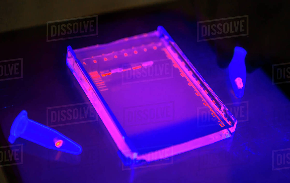 DNA samples for bioscience research Royalty-free stock photo