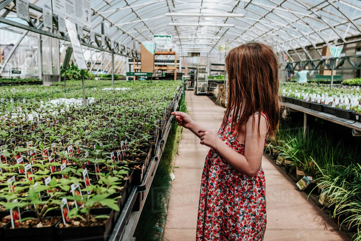 Side view of young girl looking at plants in green house Royalty-free stock photo
