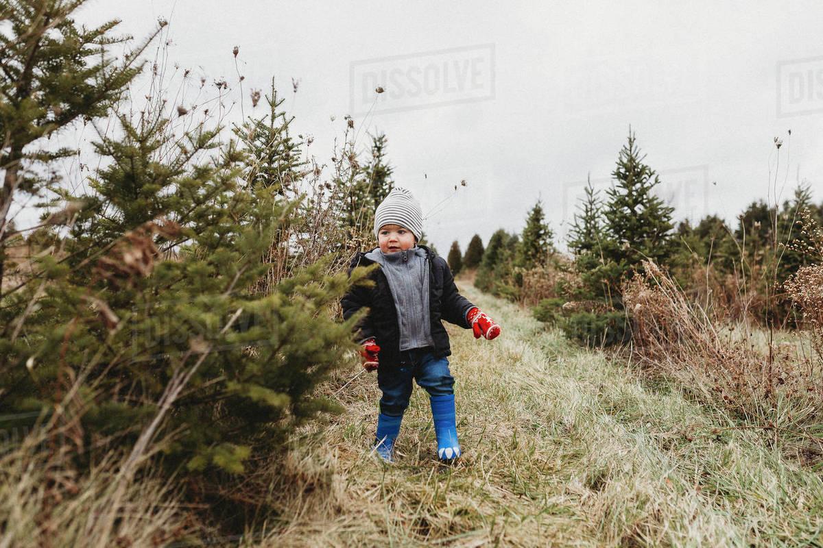 Toddler boy on Christmas tree hunt in tree farm Royalty-free stock photo