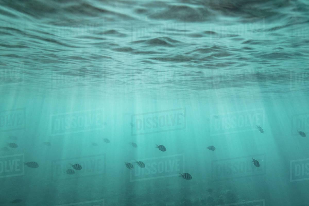 School of fish swim through light streaks under the ocean's surface Royalty-free stock photo