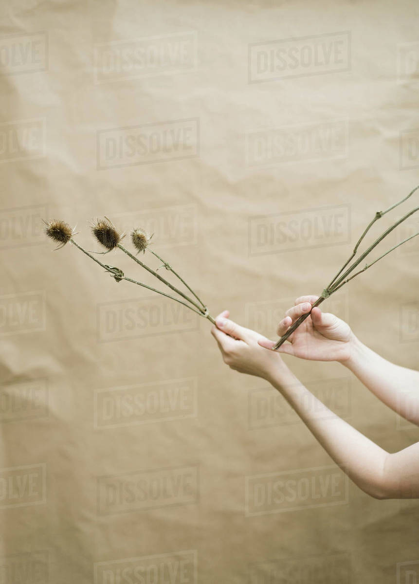 Woman  holding flowers  on beige background Royalty-free stock photo