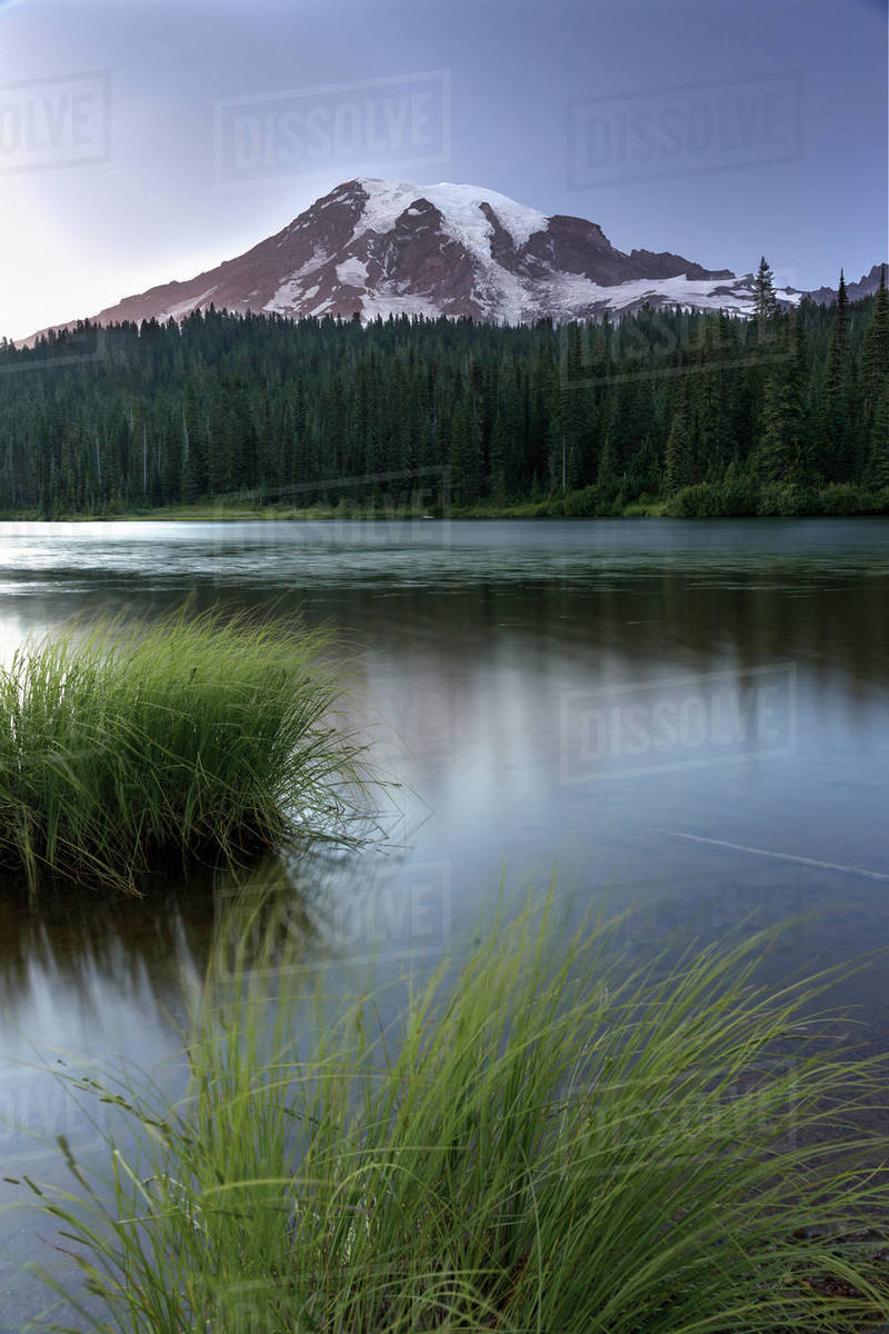 Tall water grass in front of Reflection Lake and Mount Rainier Royalty-free stock photo