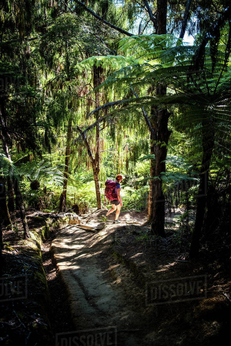 Woman walking through forest on the Abel Tasman Coast Track Royalty-free stock photo