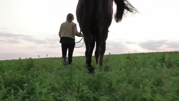 Rear view of woman walking with horse on grassy field Royalty-free stock video