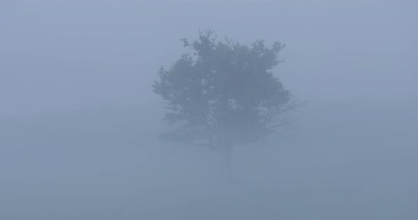 Dolly shot of tree on field in foggy weather Royalty-free stock video