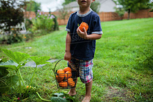 Low section of boy holding pumpkins in bucket while standing in yard Royalty-free stock photo